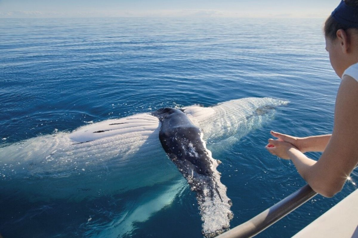 Image: Whale Watching via Tourism & Events Queensland